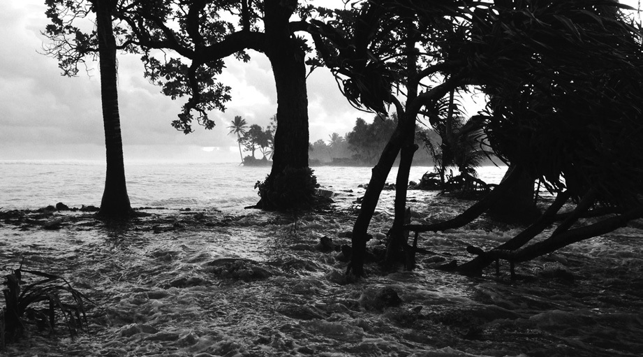 Water rushing through trees (photo) | Zinn Education Project